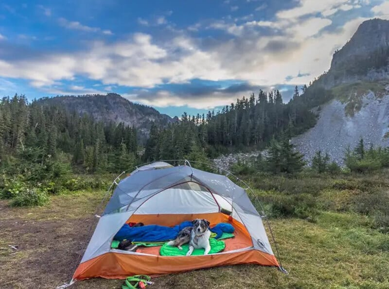 best tents for backpacking with dogs