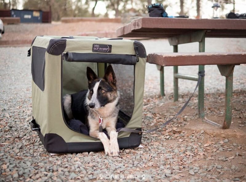 Top 22 Best Tents For Camping With Dogs In 2020