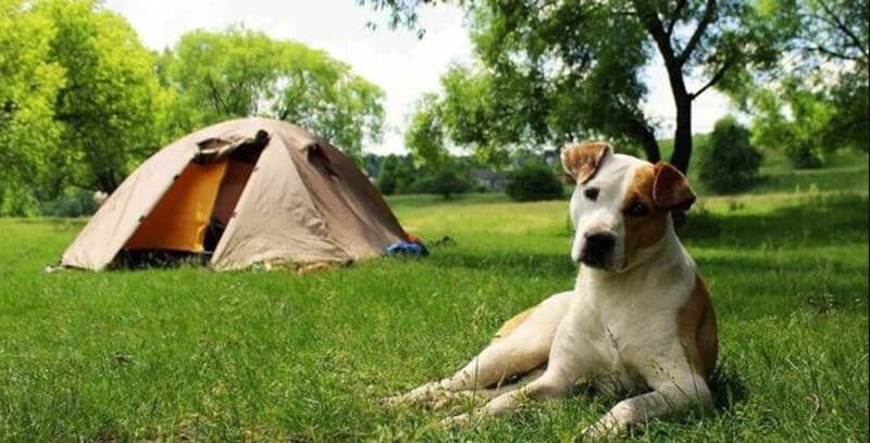 What is best tent for dog owners