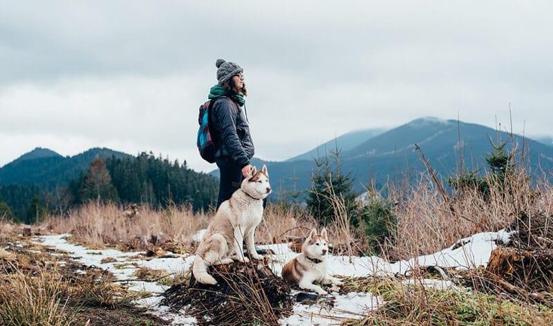 Best Dog Breeds For Hiking