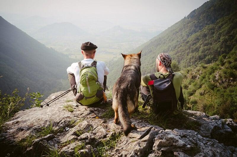 Dog Breeds For Hiking