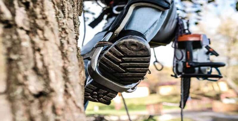 Top 9 Best Tree Climbing Spikes