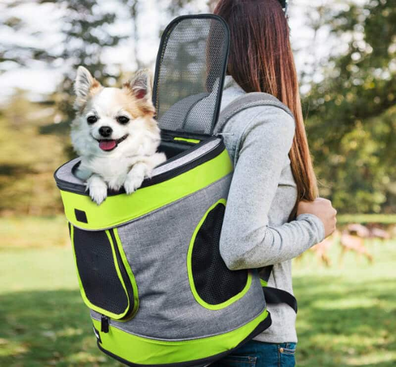 Top Brands Of The Best Dog Backpack For Hiking
