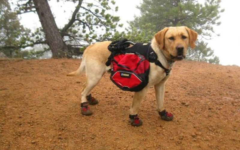 Top Brands Of The Best Dog Boots For Hiking
