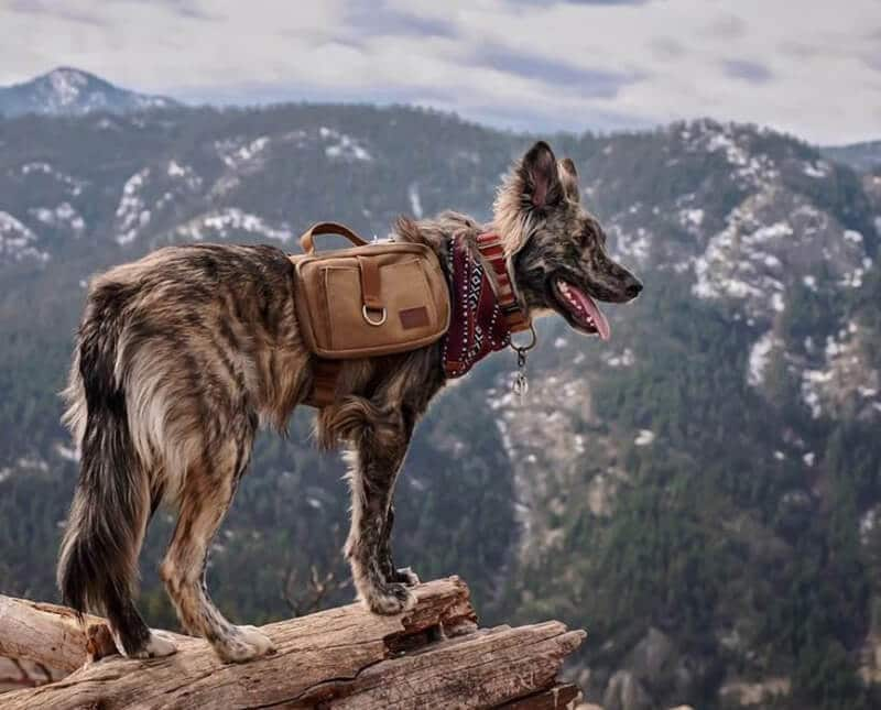 Top Brands Of The Best Dog Harness For Hiking