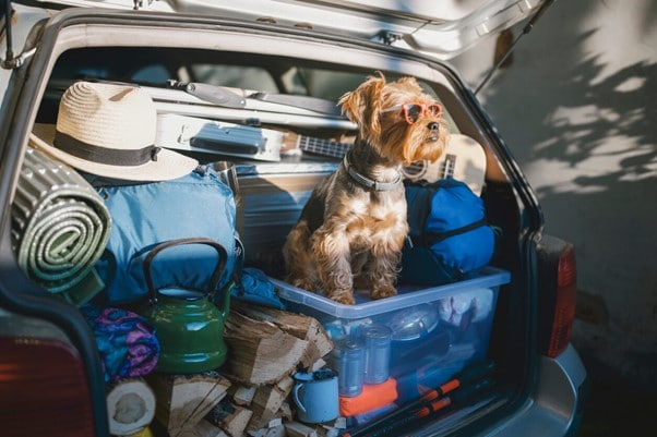 packing for camping trip with dog